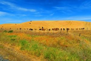 Dry surroundings Blenheim